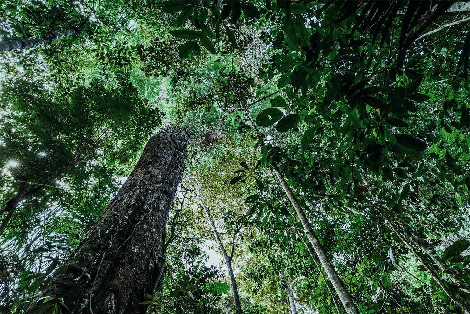 bigstock-The-Amazon-Rainforest-Brazil-102568778-Peq