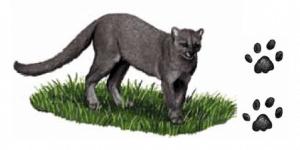 gato-mourisco e suas pegadas